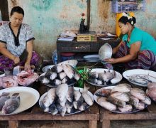 Widespread slavery in the Myanmar fishing industry